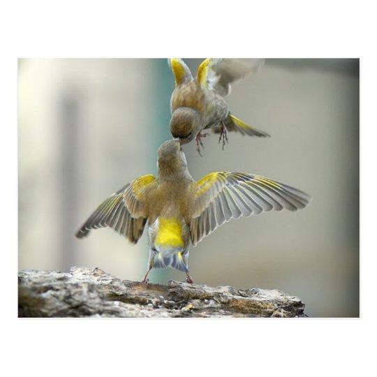 vogels briefkaart