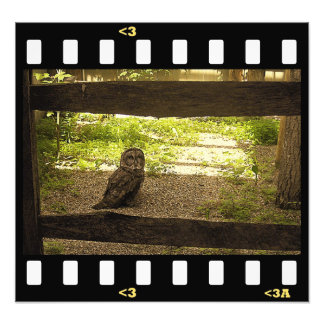 vogels uil foto