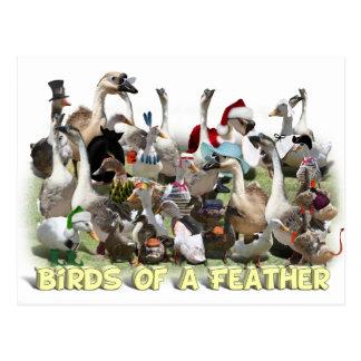 Vogels van een Veer Briefkaart