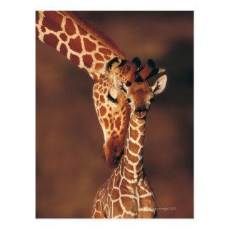 Volwassen Giraf met kalf (camelopardalis Giraffa) Briefkaart