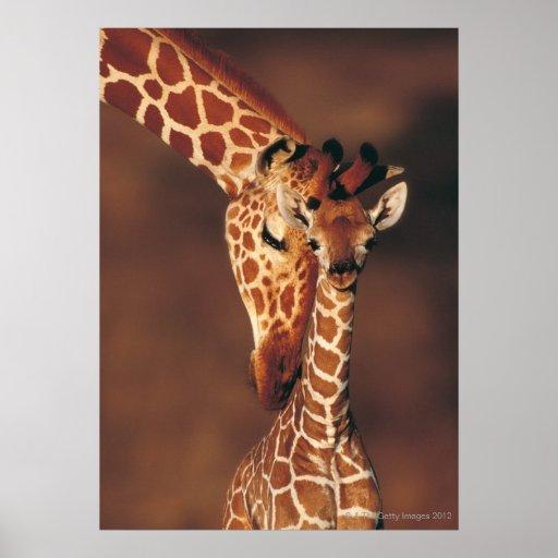 Volwassen Giraf met kalf (camelopardalis Giraffa) Plaat