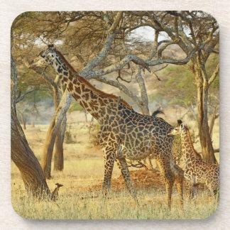 Volwassen vrouwelijke en jeugdGiraf, Giraffa Onderzetter