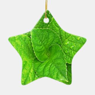 Voor de Liefde van Natuur Keramisch Ster Ornament