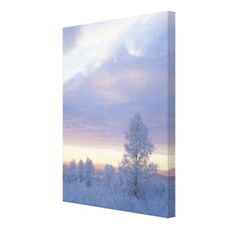 Vorst-behandeld Bos Canvas Print