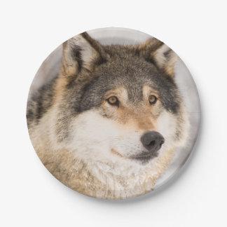 Vriendschappelijke het glimlachen van de Wolf Papieren Bordjes