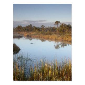 Vroege ochtend in Endla Natuurreservaat Estland Briefkaart