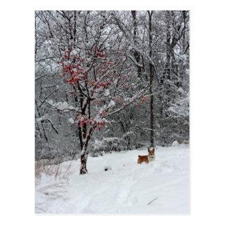Vroege Sneeuw: Het Briefkaart van Corgi
