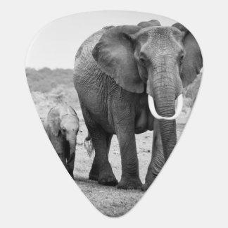 Vrouwelijke Afrikaanse olifant en drie kalveren, Plectrum