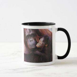 Vrouwelijke Sumatran Orangoetan met baby, Pongo Mok