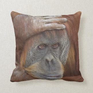Vrouwelijke Sumatran Orangoetan, pygmaeus Pongo Sierkussen