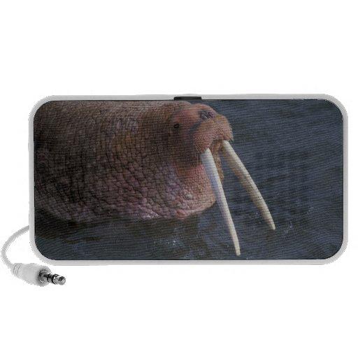 Walrussen Reis Speaker