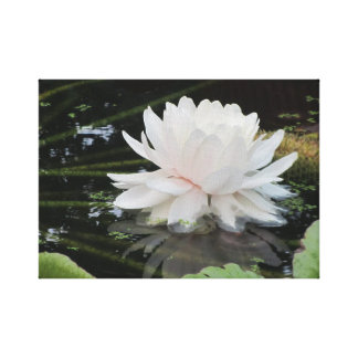 Waterlelie - Victoria Amazonica Canvas Afdruk