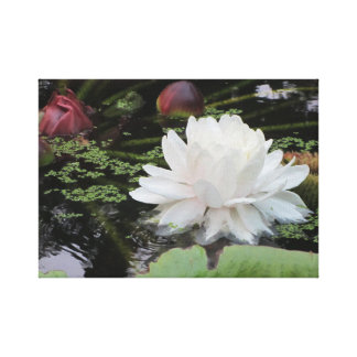 Waterlelie - Victoria Amazonica Canvas Print