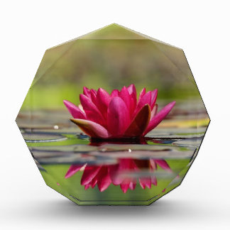 Waterlelies Acryl Prijs