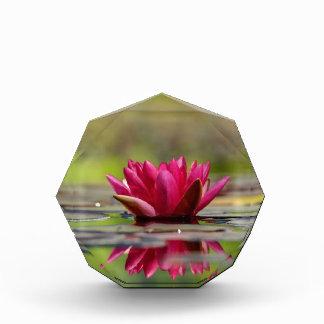 Waterlelies Prijs