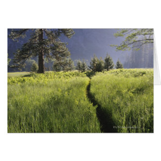 Weg in weide, Nationaal Park Yosemite Briefkaarten 0