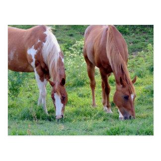 Weidende Paarden Briefkaart