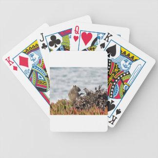 Weinig eekhoorn pak kaarten