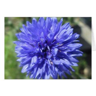 Wenskaart - de Blauwe Korenbloem van de Korenbloem