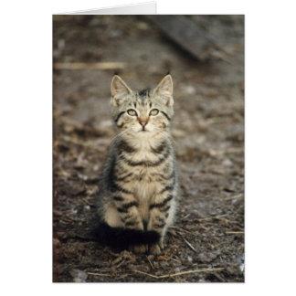 """Wenskaart van de Foto """"van het Katje van de"""