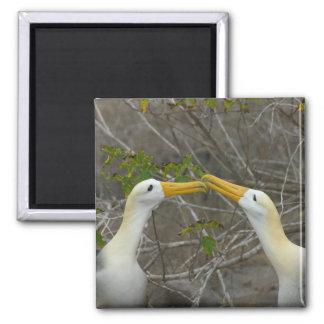 Werk vrijagedans van Gegolfte Albatros uit, Magneet
