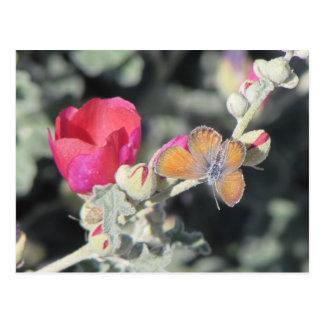 Westerne Pygmy Blauwe Vlinder Briefkaart