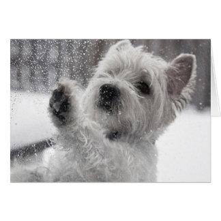 Westie in de Regen Kaart