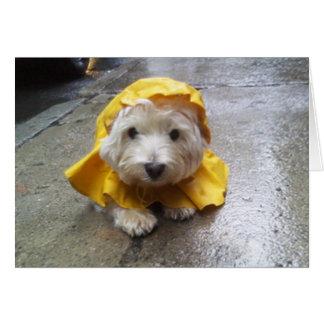 Westie in Geel MAC van de Regen! Kaart