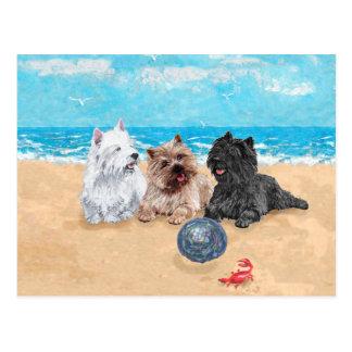 Westie met Steenhoop Terriers bij het Strand Briefkaart