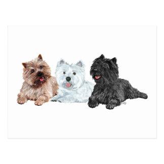 Westie met Twee Steenhoop Terriers Briefkaart