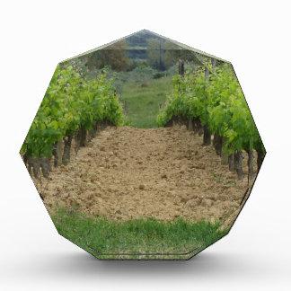 Wijngaard in de lente. Toscanië, Italië Acryl Prijs