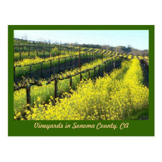 Wijngaarden met het Briefkaart van het Zaad van de