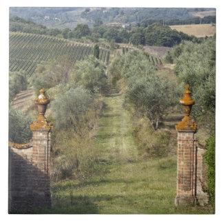 Wijngaarden, Toscanië, Italië Keramisch Tegeltje
