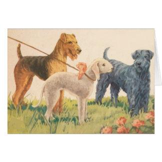 Wijnoogst - 3 Hondenrassen van Terrier (Spatie Briefkaarten 0