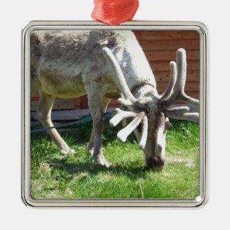 wild Noorwegen Zilverkleurig Vierkant Ornament