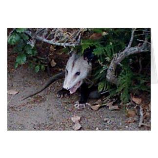 Wild Opossum Kaart