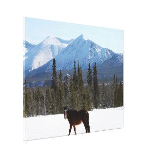 Wild paard op de Weg van Alaska Canvas Afdrukken