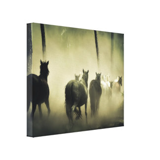 Wild paarden canvas afdruk