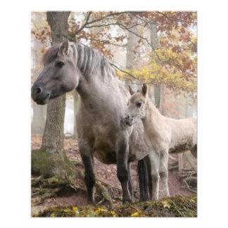 Wild paarden folders