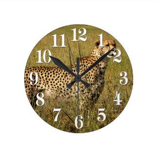 Wilde Afrikaanse Jachtluipaard in de Grassen van Ronde Klok