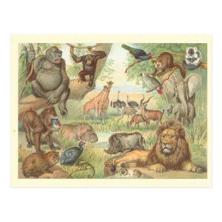 Wilde dieren van Afrika Briefkaart