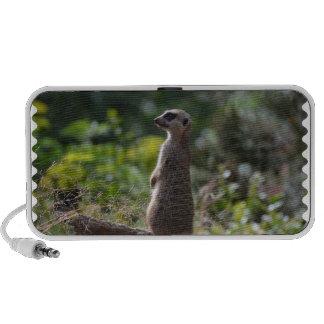 Wilde Meerkat iPod Speaker