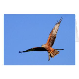Wilde Rode Vliegers Briefkaarten 0