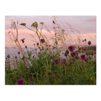 Wildflowers bij Schemer Briefkaart