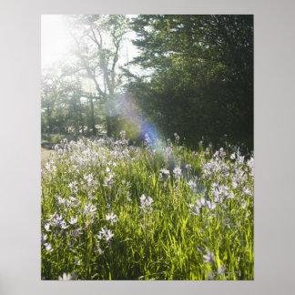 Wildflowers op gebied poster