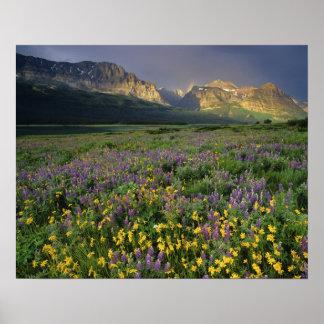Wildflowers van de prairie vullen weide dichtbij M Poster