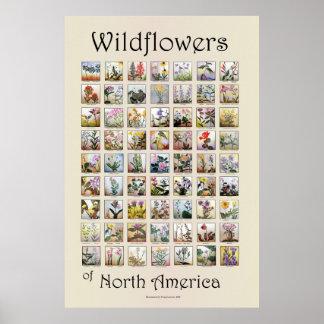 Wildflowers van Noord-Amerika Poster