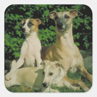 Windhond en Puppy Vierkante Stickers