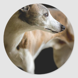 Windhond Ronde Stickers