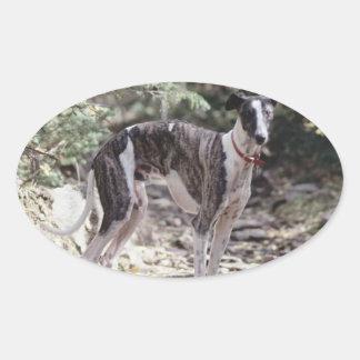 Windhond Ovale Sticker